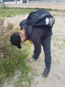A photo of a member of my project group taking the measurements of a L. cytisoides plant