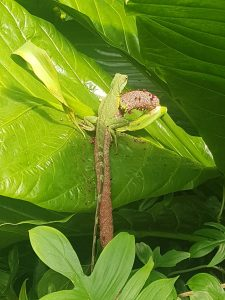 A photo of a lizard on a plant.