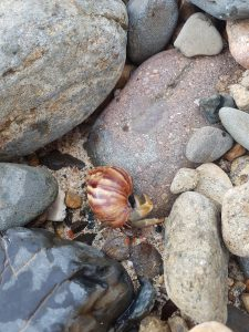 A photo of a hermit crab