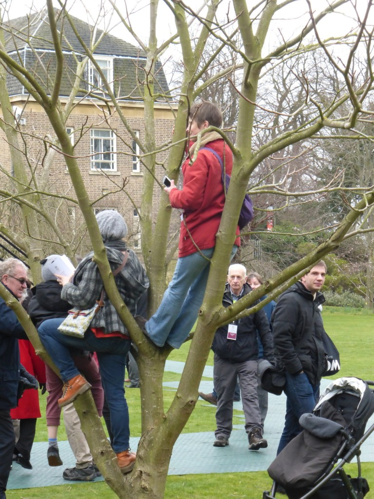 Climbing trees for a better view!