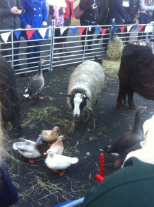 Petting Zoo at University on Thursday 16.01.2014