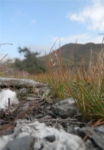 Several grass plants growing in the schist. Weather was really fair this day.