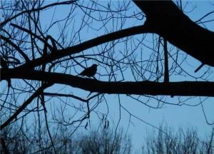 Bird in Vicky Park