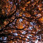 Autumn at University