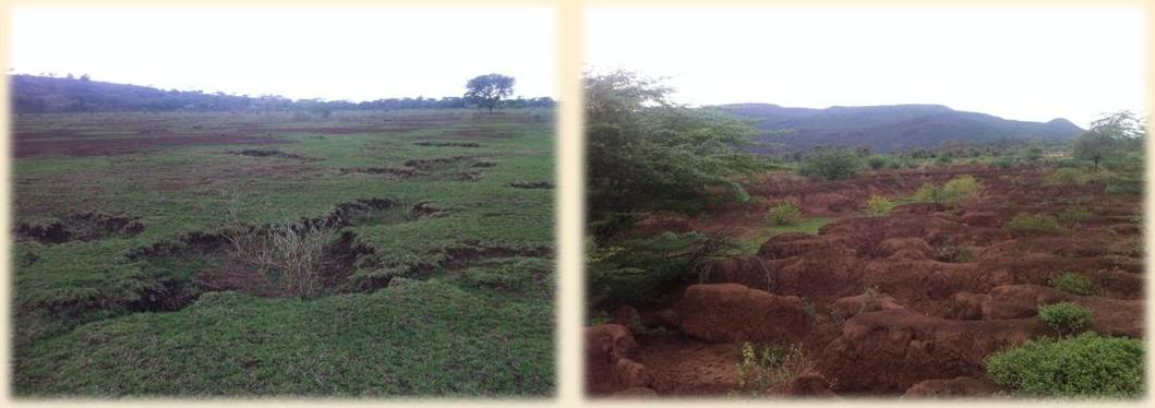 Two images taken of Kesubo Swamp, where the land erosion is particularly severe and formed the focus of our project.
