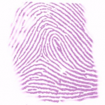 An example of a current technique used on latent fingerprints. Here Ninhydrin reacts with the amino acid lysine, causing a product that displays a distinct purple colour. Image taken from Wikipedia