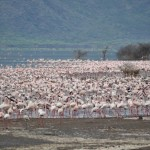 The local wildlife at Lake Bogoria, taken by Alexander Young (one of the students)