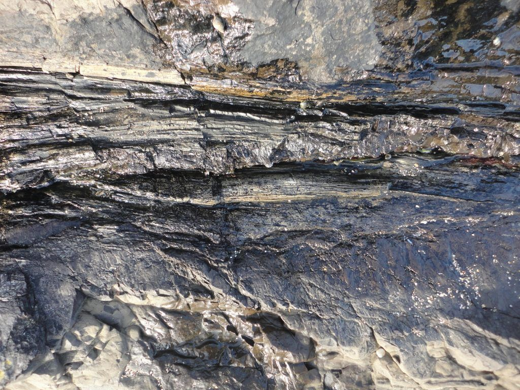 A petrified log on the beach (I've been a bad geologist and not included a scale in the photograph, its about 0.5m across)