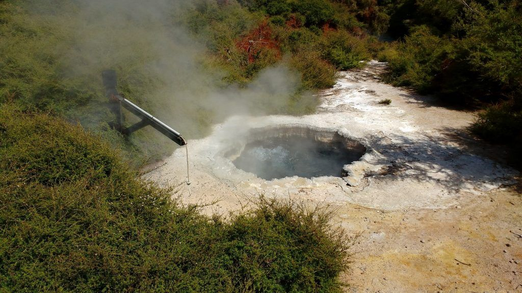 You can even have an egg cooked in hot pools at Te Puia